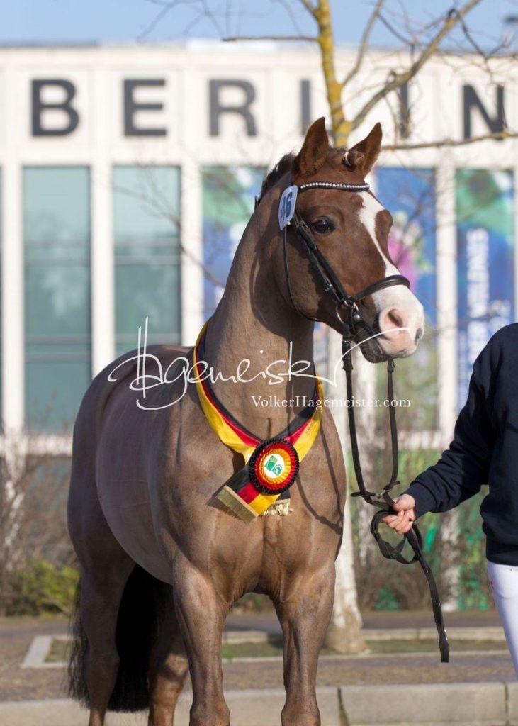 Bundeschampionatsqualifikation Heide 6
