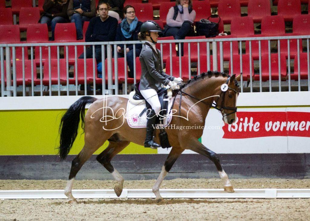 Bundeschampionatsqualifikation Heide 14