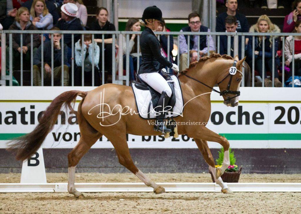 Bundeschampionatsqualifikation Heide 26