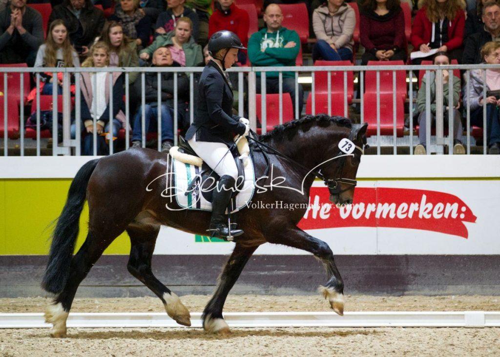 Bundeschampionatsqualifikation Heide 56