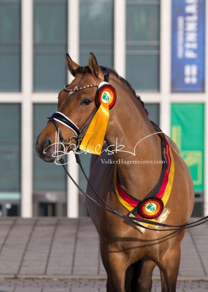 Bundeschampionatsqualifikation Heide 72