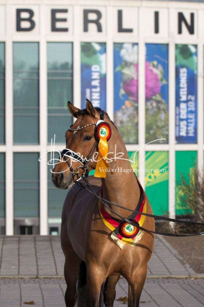Bundeschampionatsqualifikation Heide 74