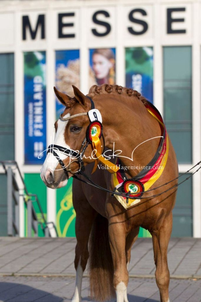 Bundeschampionatsqualifikation Heide 91