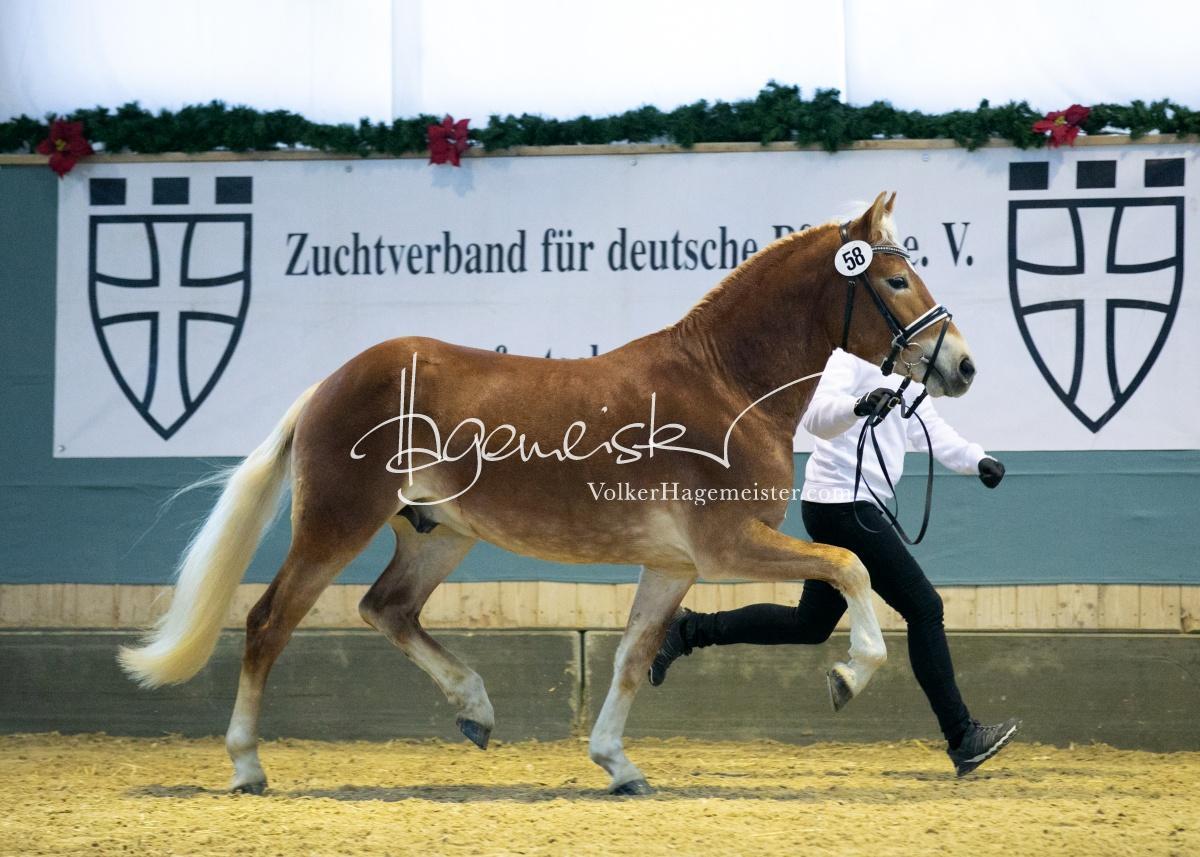 Kreuth ZfdP Körung Sonntag 116
