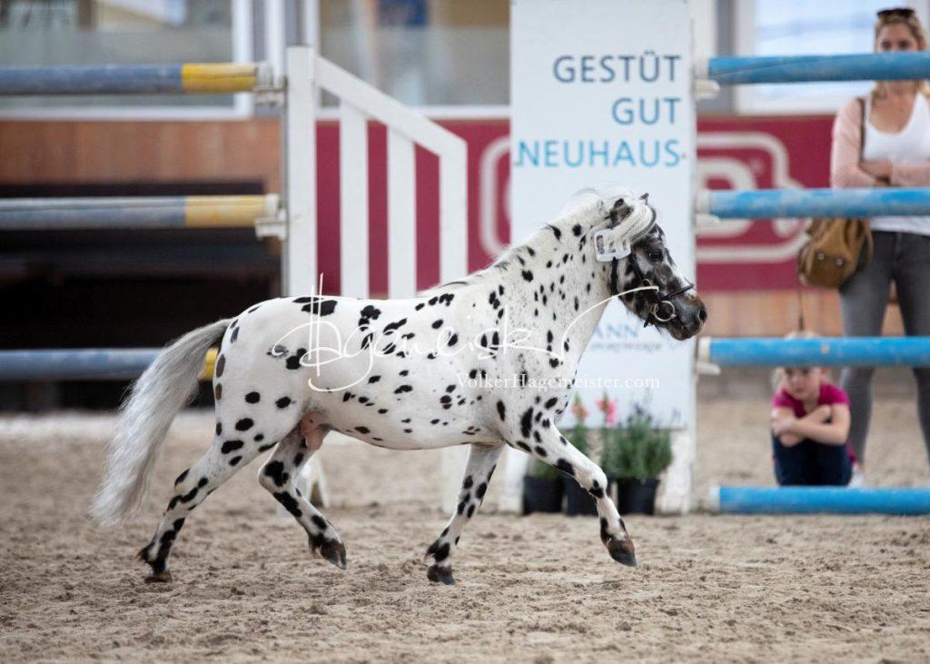 Sommerkörung ZfdP Grevenbroich 61