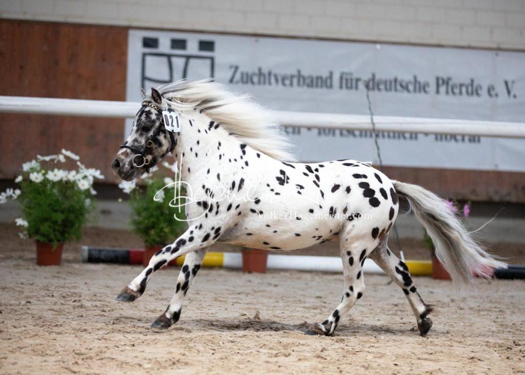 Sommerkörung ZfdP Grevenbroich 62
