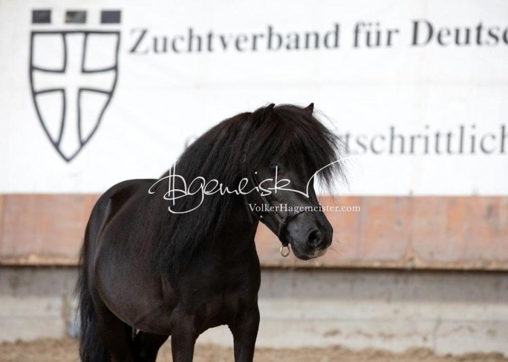 Sommerkörung ZfdP Grevenbroich 67