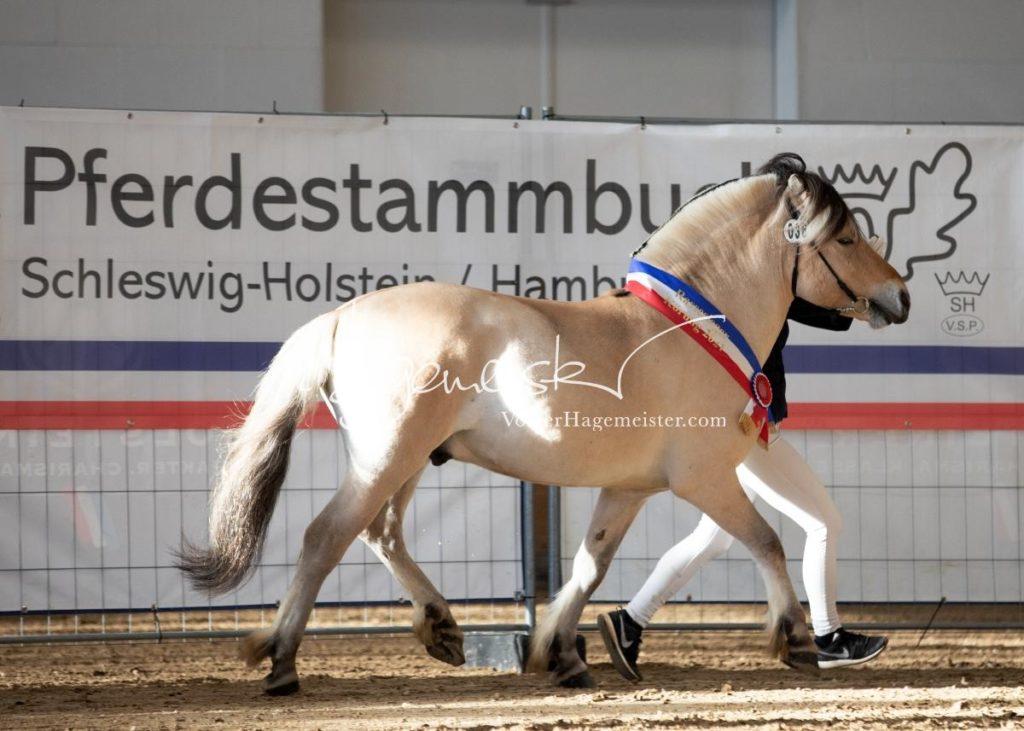PSB Siegerhengste 111