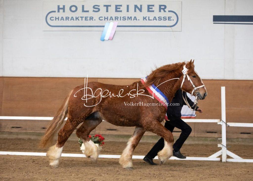 PSB Siegerhengste 76