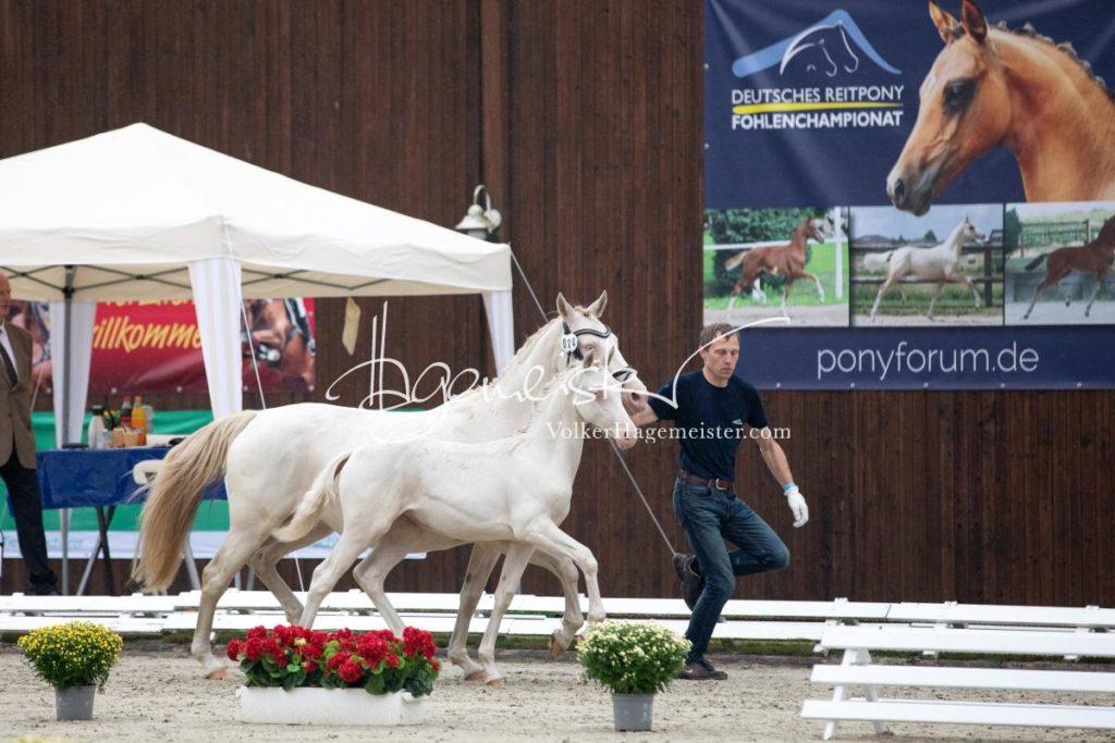 Deutsches Reitpony Fohlenchampionat 87