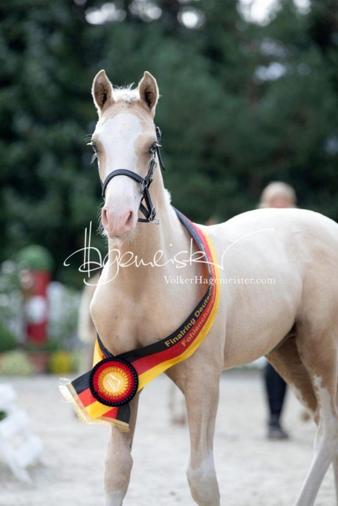 Deutsches Reitpony Fohlenchampionat 41