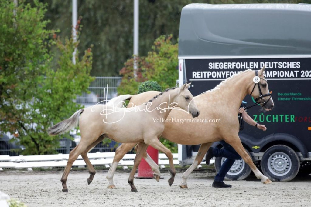 Deutsches Reitpony Fohlenchampionat 82