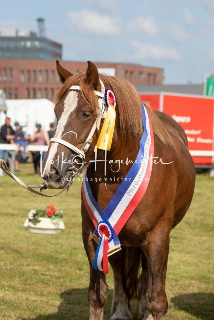 NORLA Sieger 2021 17